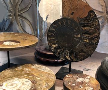 Naturobjekte, Marmortischen und Accessoires